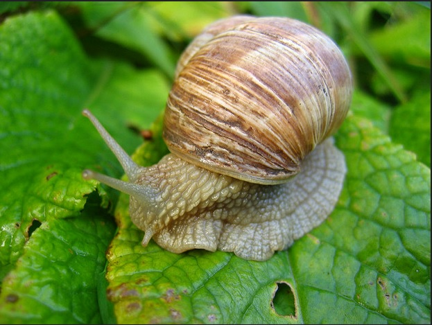 Snail slime| Usage for Anti-Aging